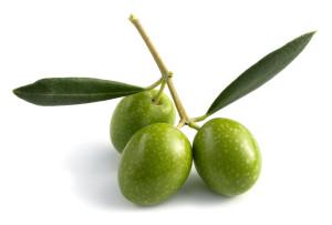 Olives leaves